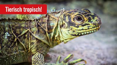 Rallye Tropen-Aquarium - Tropenwelt, Kinder ab 10 Jahre - deutsch