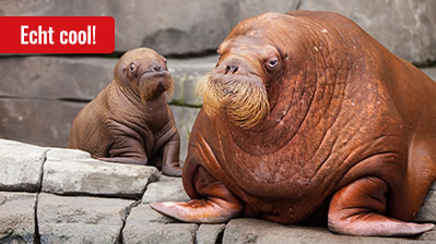 Rallye Tierpark, Kinder bis 10 Jahre - deutsch