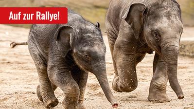 Rallye Tierpark, Kinder ab 10 Jahre - deutsch