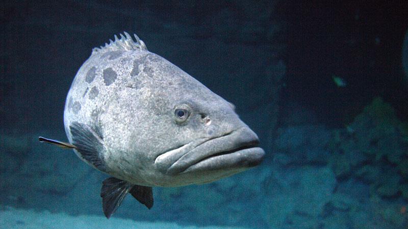 Einzelkarte Tropen-Aquarium Erwachsener