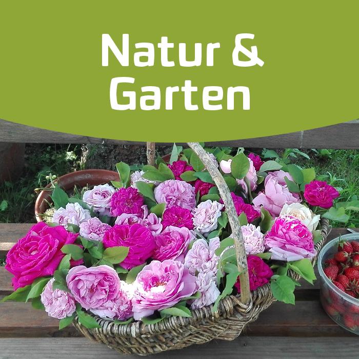 Blütenküche: Rosen