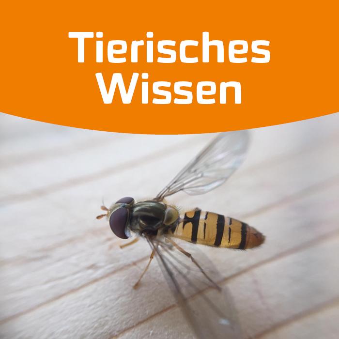 Keine Welt ohne Insekten