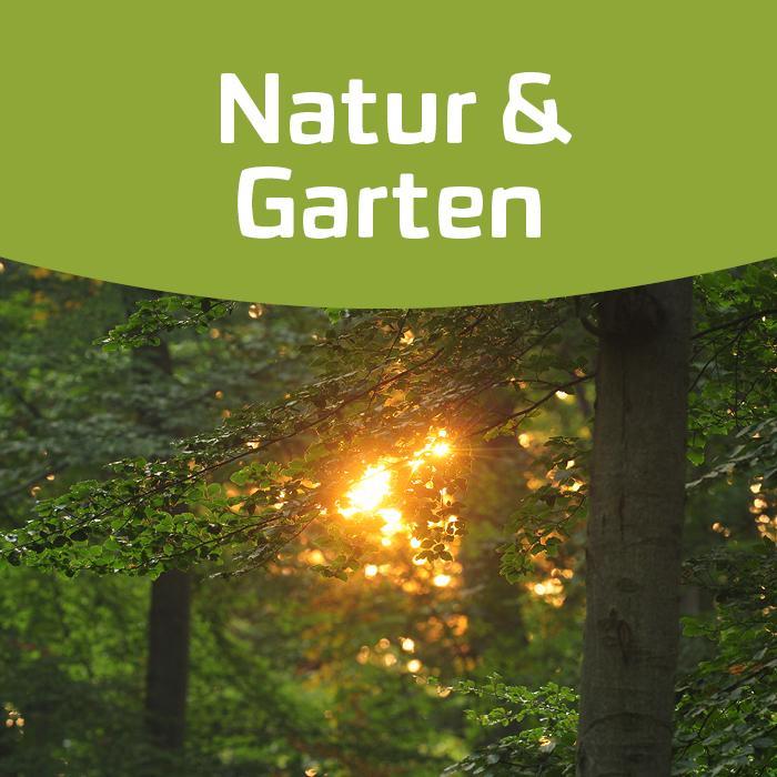 Lebensraum Wald! Auf den Spuren unserer Bäume!