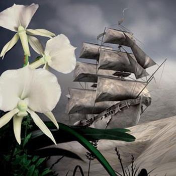 Orchideen - Wunder der Evolution