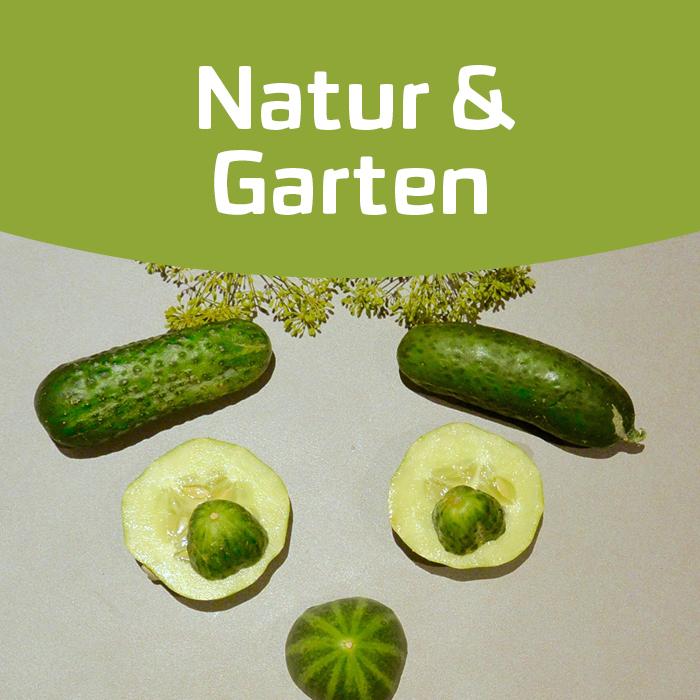 Gurke satt – ein Gemüsekennenlerntag