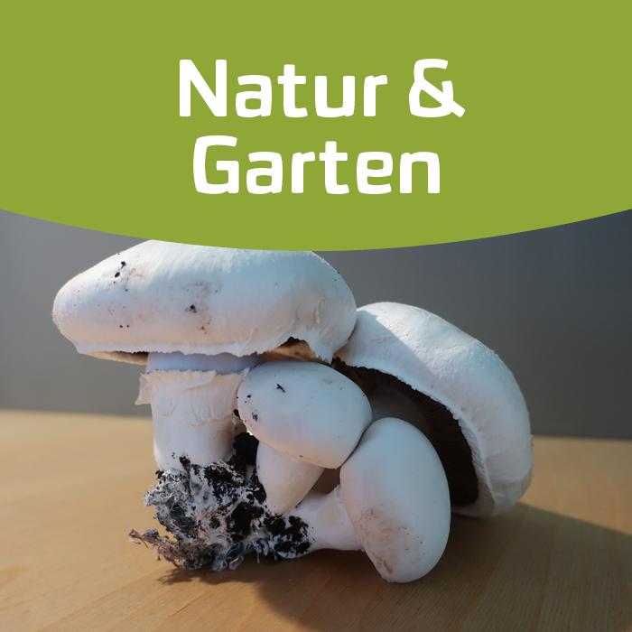 Den Beruf Gärtner erleben – die Welt der Pilze!