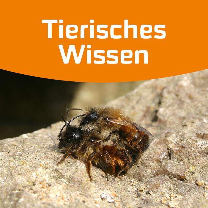 Die Lebensräume der Wildbienen