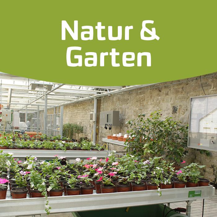 Ohne Blüte und Biene geht's auch – Pflanzenvermehrung in der Gärtnerei