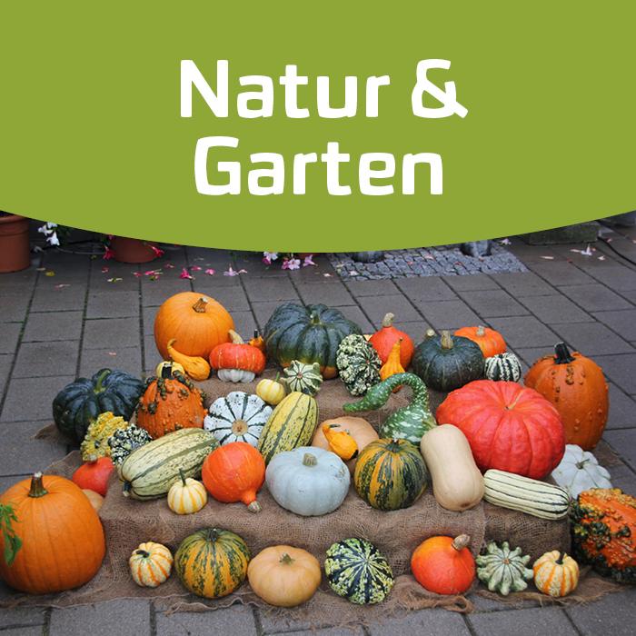 Kürbisse – ein Gemüse voller Vielfalt