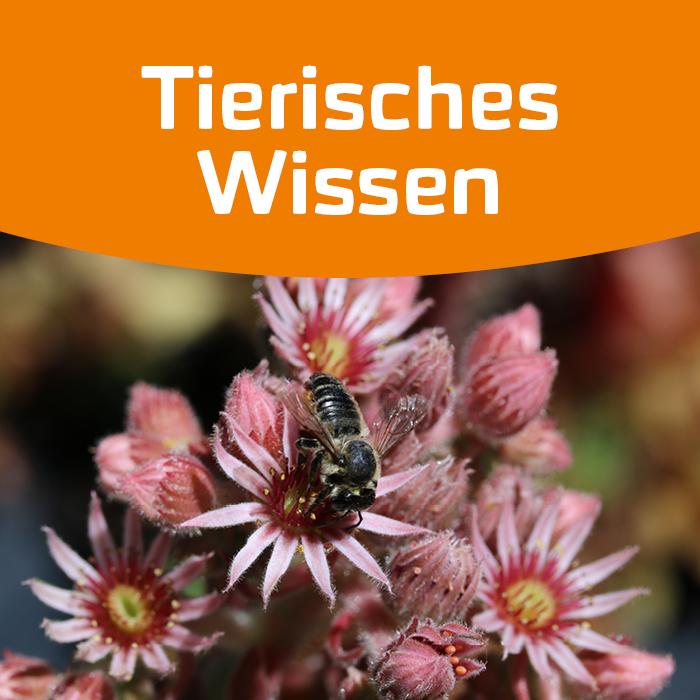 Bunte Blüten für Wildbienen