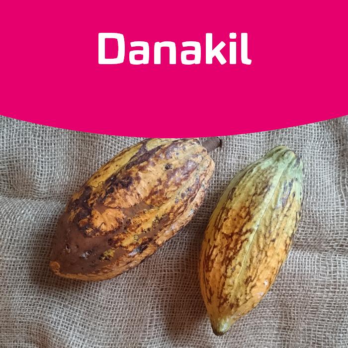 Vom Kakaobaum zur Schokolade