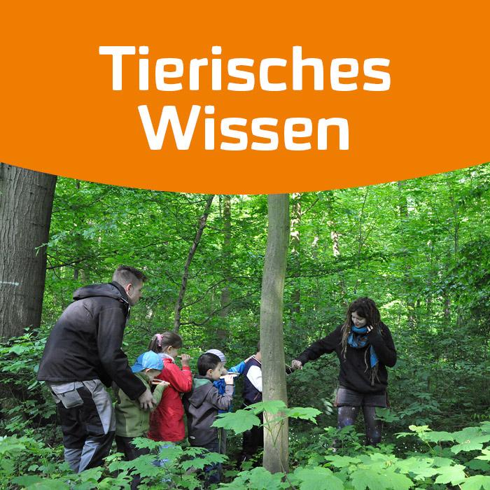 BUGA Wald Erlebnis 2